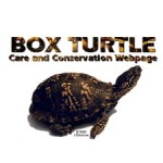 Box Turtle Care & Conversation